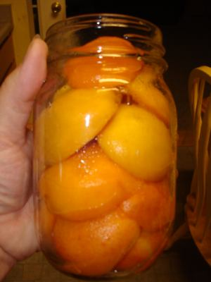 What the fruit will look like using this home canning recipe for apricots.